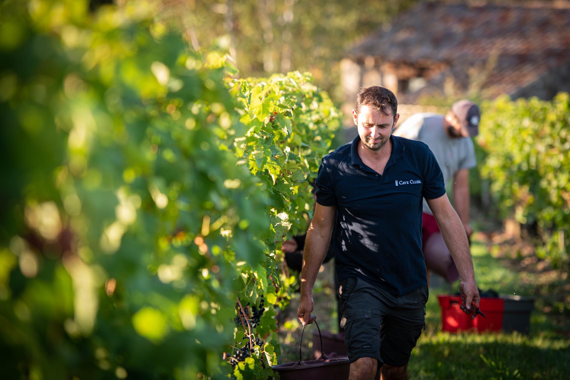 photographe, vignes, domaine, vendange, Chavanay